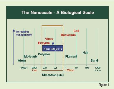 The Nanoscale - A Biological Scale
